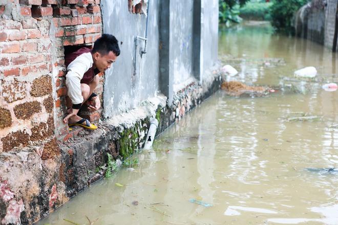 Hà Nội: Sau một đêm, làng biến thành sông, người dân trắng đêm sơ tán đồ đạc, gia súc - Ảnh 17.