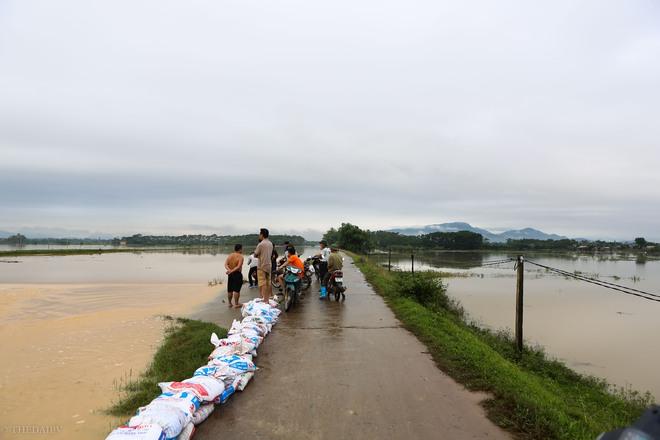 Hà Nội: Sau một đêm, làng biến thành sông, người dân trắng đêm sơ tán đồ đạc, gia súc - Ảnh 18.