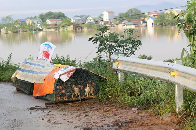 Hà Nội: Sau một đêm, làng biến thành sông, người dân trắng đêm sơ tán đồ đạc, gia súc - Ảnh 8.
