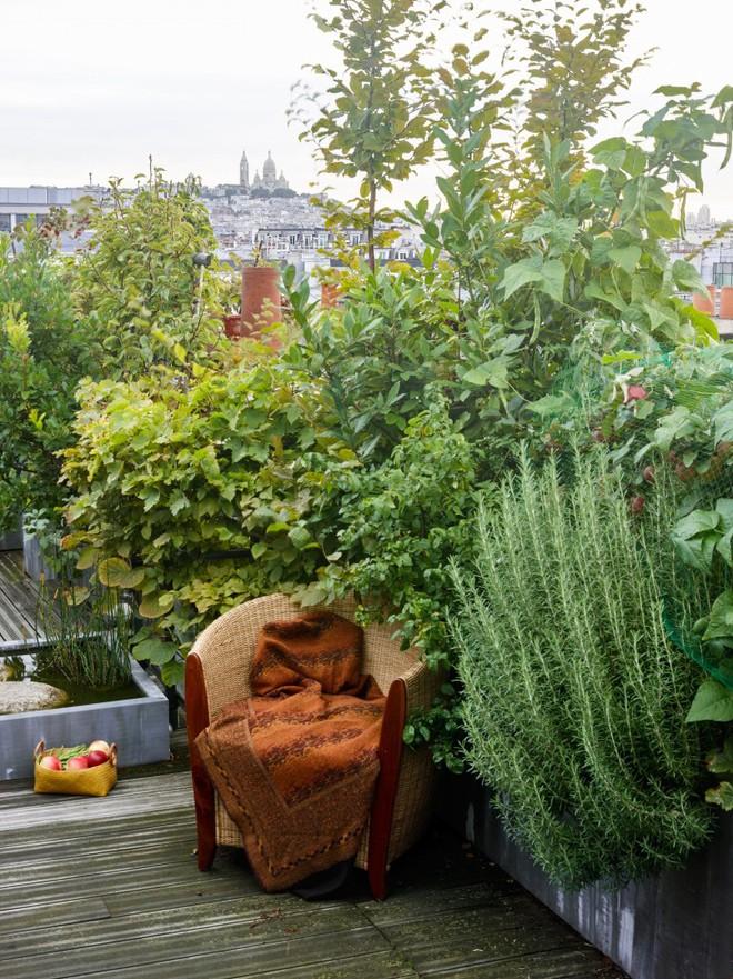 Khu vườn trên mái nhà ngập tràn cây trái với hướng nhìn thẳng ra tháp Eiffel - Ảnh 9.