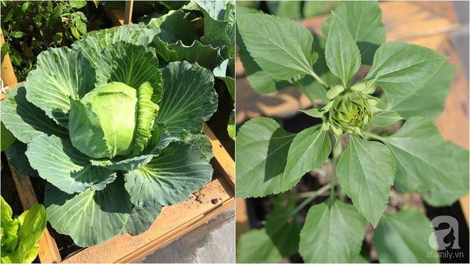 Trồng rau trong khung gỗ - giải pháp vừa có rau sạch để ăn lại vừa có khu vườn đẹp - Ảnh 1.