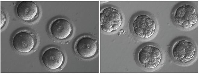 Đột phá lớn: Các nhà khoa học chỉnh sửa được gen trong phôi thai - Ảnh 1.