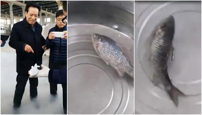 Đoạn video gây sốt: Cá đóng băng trong tủ lạnh -100 độ C hồi sinh, bơi tung tăng sau vài phút ngâm nước - Ảnh 3.