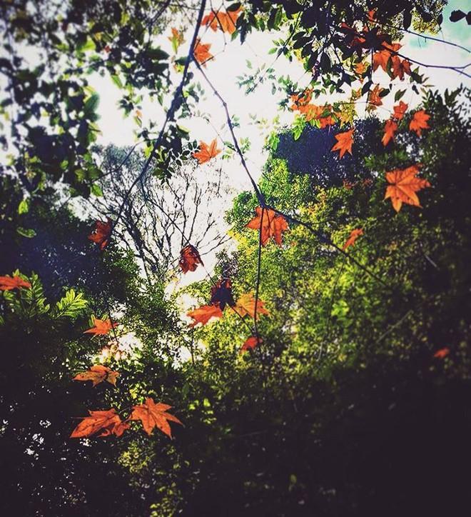 Mùa cưới đến rồi, bỏ túi ngay những địa chỉ chụp ảnh đẹp mê ly với lá vàng, lá đỏ này thôi - Ảnh 17.