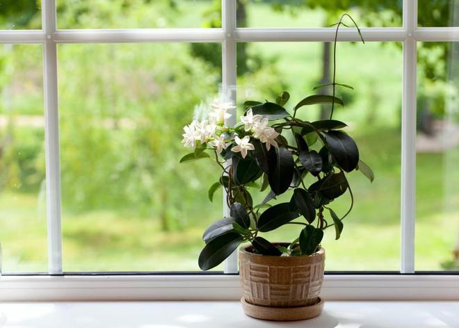10 loại cây cảnh thanh lọc không khí trong phòng ngủ, giúp bạn ngủ ngon hơn mà lại rất dễ chăm sóc - Ảnh 1.