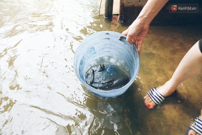 Cảnh tượng bi hài của người Sài Gòn sau những ngày mưa ngập: Sáng quăng lưới, tối thả cần câu bắt cá giữa đường - Ảnh 11.