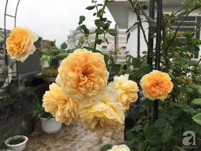 3 vườn hồng đẹp như mơ khiến độc giả tâm đắc tặng ngàn like trong năm 2017 - Ảnh 28.