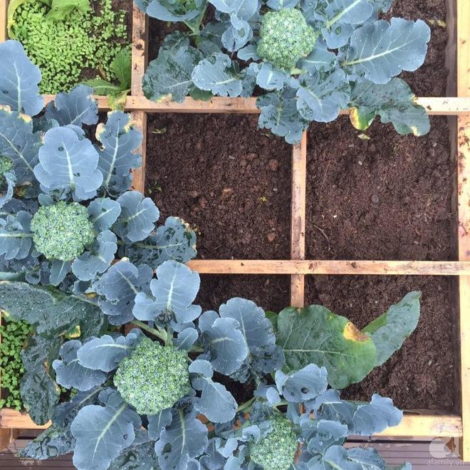 Trồng rau trong khung gỗ - giải pháp vừa có rau sạch để ăn lại vừa có khu vườn đẹp - Ảnh 12.