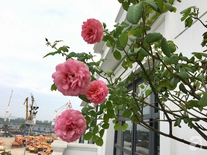 3 vườn hồng đẹp như mơ khiến độc giả tâm đắc tặng ngàn like trong năm 2017 - Ảnh 29.