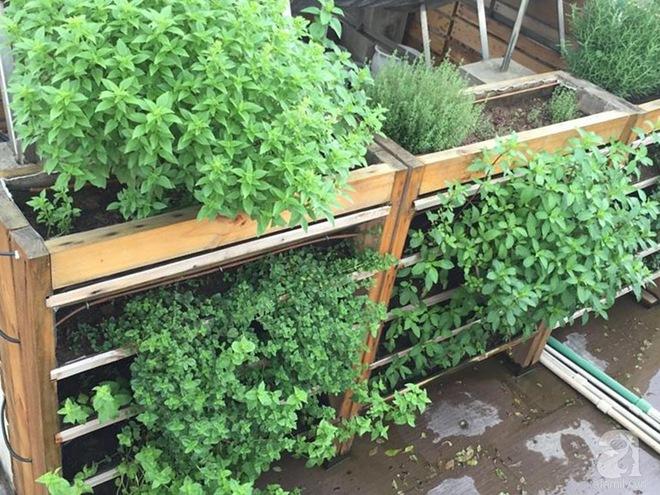 Trồng rau trong khung gỗ - giải pháp vừa có rau sạch để ăn lại vừa có khu vườn đẹp - Ảnh 17.