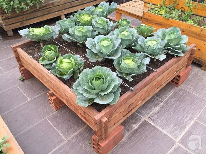 Trồng rau trong khung gỗ - giải pháp vừa có rau sạch để ăn lại vừa có khu vườn đẹp - Ảnh 19.
