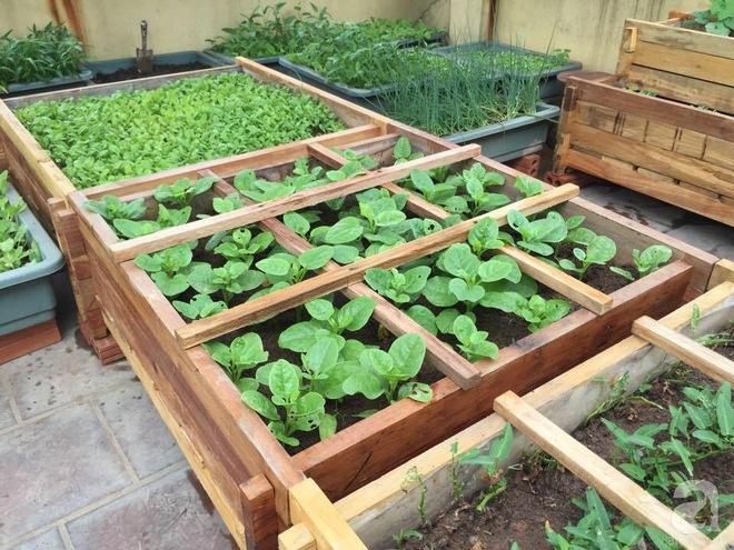 Trồng rau trong khung gỗ - giải pháp vừa có rau sạch để ăn lại vừa có khu vườn đẹp - Ảnh 3.