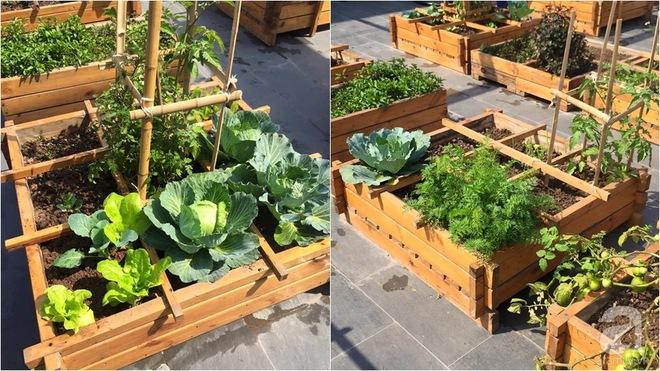 Trồng rau trong khung gỗ - giải pháp vừa có rau sạch để ăn lại vừa có khu vườn đẹp - Ảnh 21.