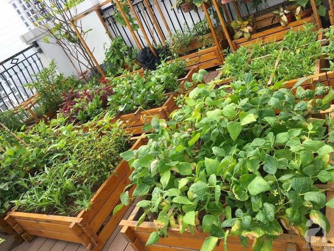Trồng rau trong khung gỗ - giải pháp vừa có rau sạch để ăn lại vừa có khu vườn đẹp - Ảnh 22.