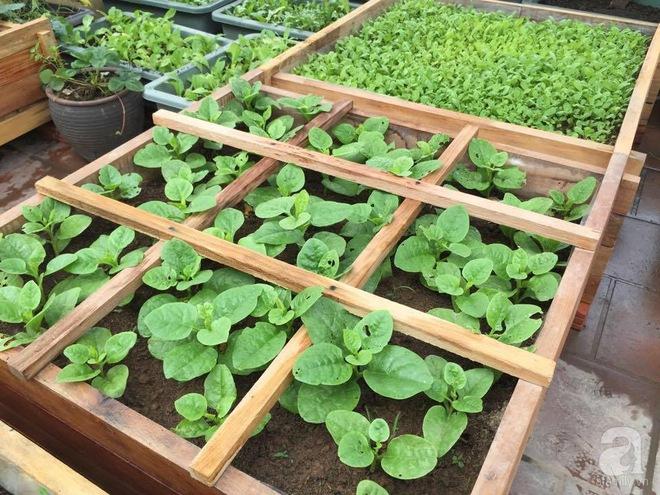 Trồng rau trong khung gỗ - giải pháp vừa có rau sạch để ăn lại vừa có khu vườn đẹp - Ảnh 5.