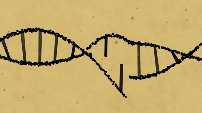 Đột phá lớn: Các nhà khoa học chỉnh sửa được gen trong phôi thai - Ảnh 5.