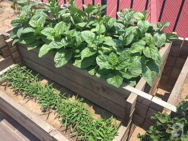 Trồng rau trong khung gỗ - giải pháp vừa có rau sạch để ăn lại vừa có khu vườn đẹp - Ảnh 6.