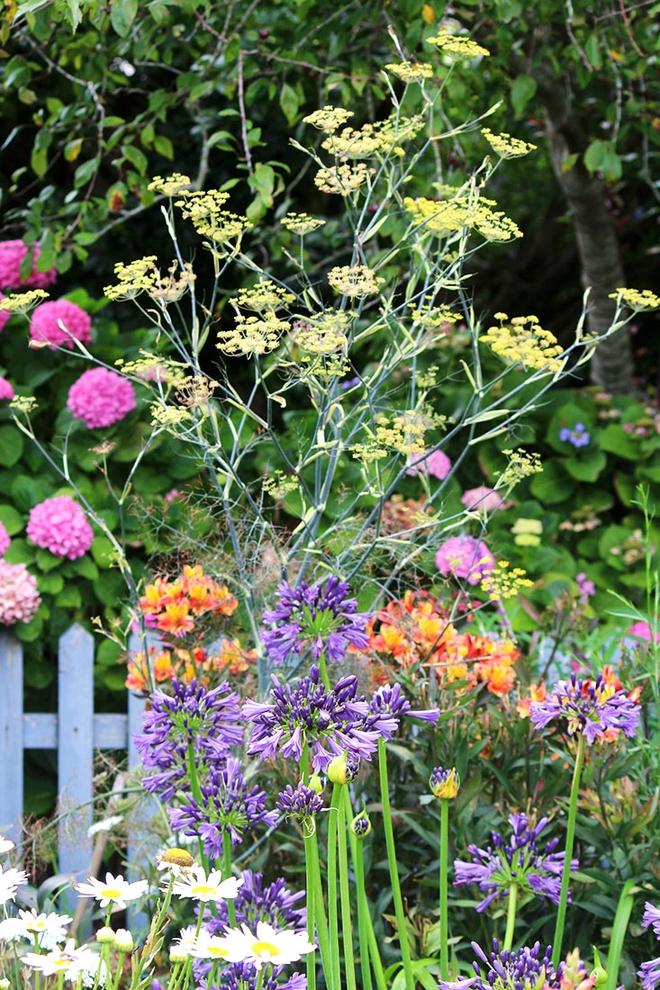 Khu vườn địa đàng của cụ bà 83 tuổi đã dành 33 năm để thỏa mãn tình yêu với cây và hoa - Ảnh 5.