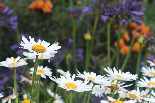 Khu vườn địa đàng của cụ bà 83 tuổi đã dành 33 năm để thỏa mãn tình yêu với cây và hoa - Ảnh 6.