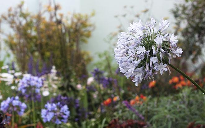 Khu vườn địa đàng của cụ bà 83 tuổi đã dành 33 năm để thỏa mãn tình yêu với cây và hoa - Ảnh 7.
