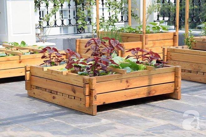 Trồng rau trong khung gỗ - giải pháp vừa có rau sạch để ăn lại vừa có khu vườn đẹp - Ảnh 9.