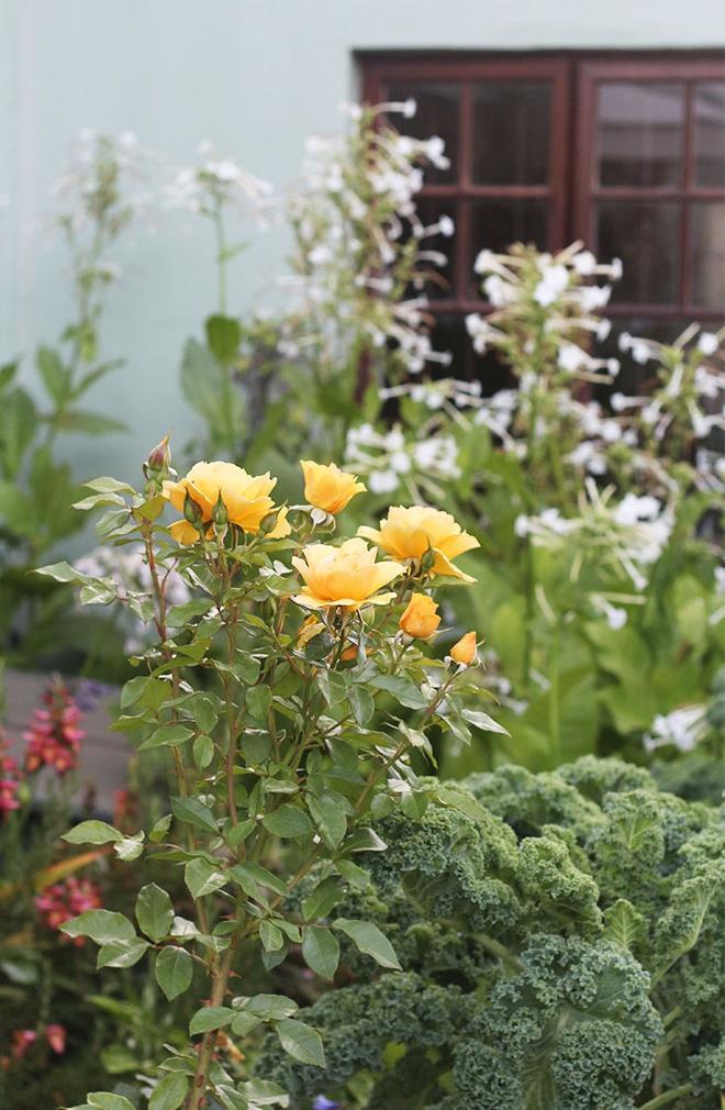 Khu vườn địa đàng của cụ bà 83 tuổi đã dành 33 năm để thỏa mãn tình yêu với cây và hoa - Ảnh 11.