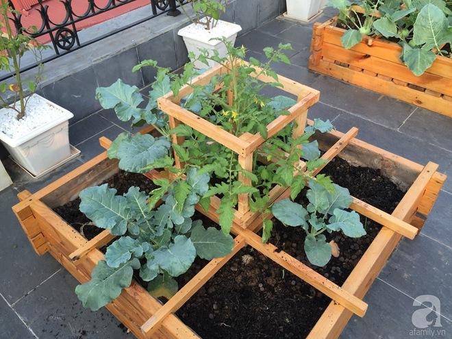 Trồng rau trong khung gỗ - giải pháp vừa có rau sạch để ăn lại vừa có khu vườn đẹp - Ảnh 10.