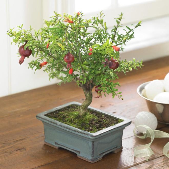 10 chậu bonsai cây ăn trái mini siêu đẹp dùng trang trí nhà dịp Tết - Ảnh 7.