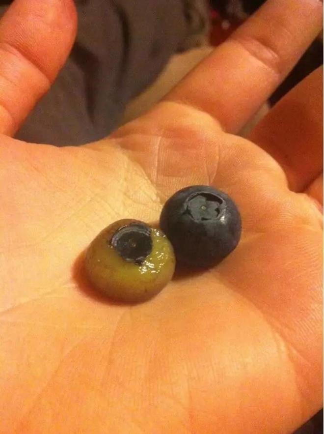 Nếu bóc trụi vỏ của các loại quả bạn sẽ mắt tròn mắt dẹt vì những thứ nhìn thấy - Ảnh 10.
