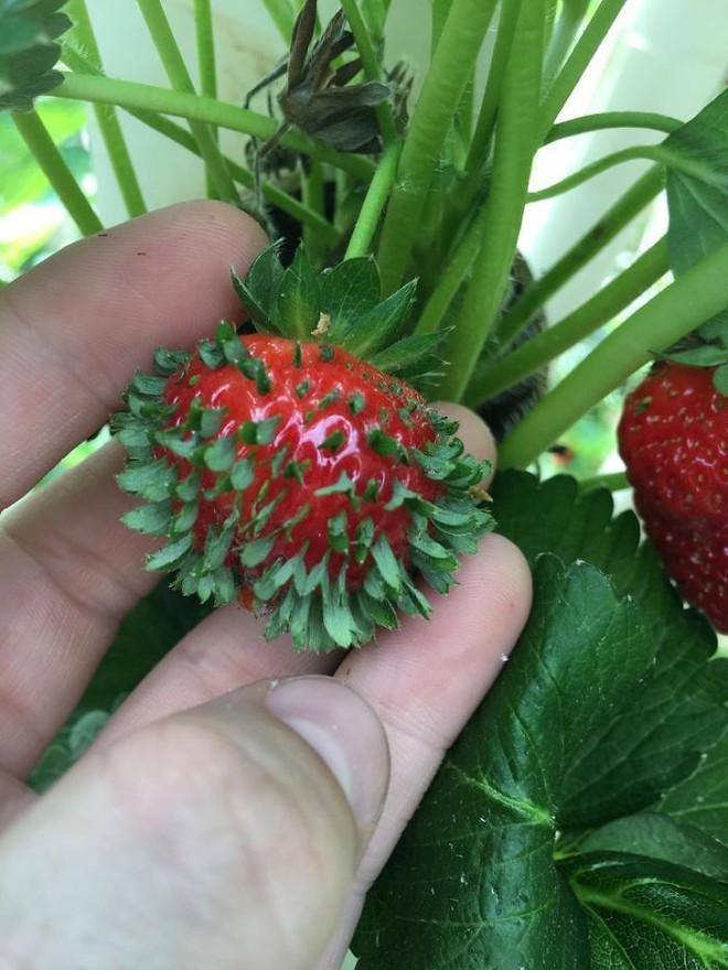 Mắt tròn mắt dẹt với những loại hạt mọc mầm đâm thủng quả để vươn ra - Ảnh 4.