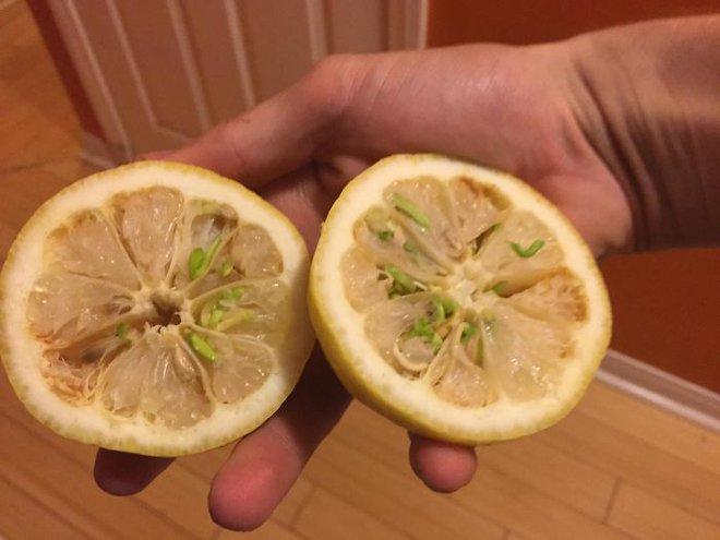 Mắt tròn mắt dẹt với những loại hạt mọc mầm đâm thủng quả để vươn ra - Ảnh 6.