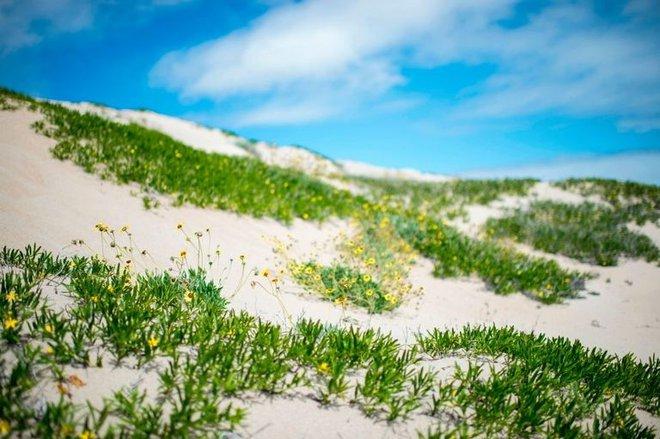 Hiện tượng kỳ lạ: Muôn hoa đua nở rực rỡ sắc màu ở sa mạc khô cằn nhất thế giới - Ảnh 10.
