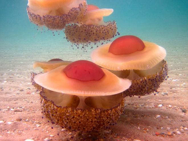 Thấy quả trứng chiên kỳ lạ trôi dưới lòng đại dương, nhiếp ảnh gia giật mình khi lại gần 10