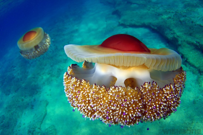 Thấy quả trứng chiên kỳ lạ trôi dưới lòng đại dương, nhiếp ảnh gia giật mình khi lại gần 9