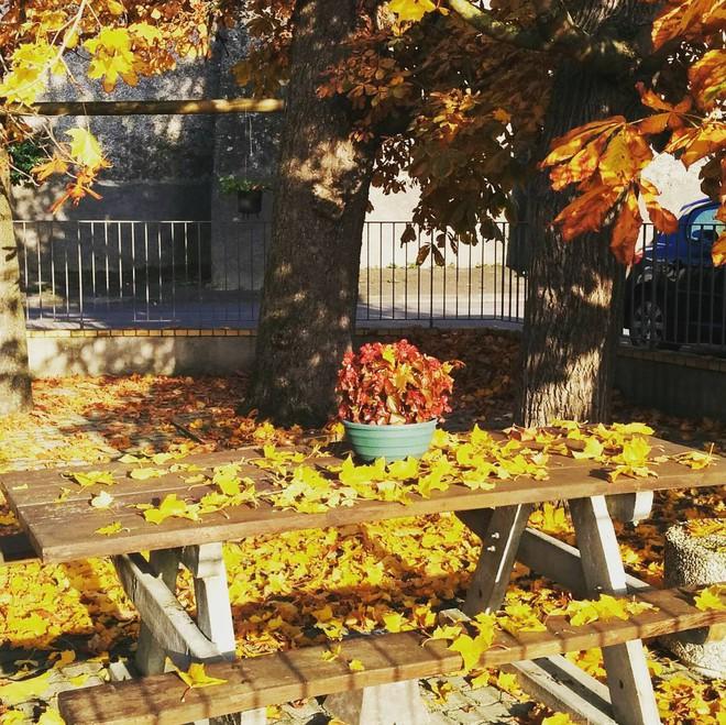 5 điểm đến mùa thu sẽ khiến bạn ngất ngây vì phong cảnh đẹp như trong mơ - Ảnh 14.