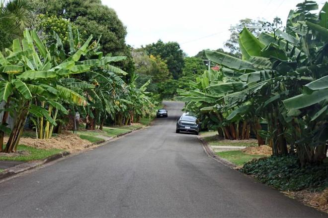 Có một khu phố xanh toàn rau quả sạch, ai đến thăm cũng không muốn về - Ảnh 16.