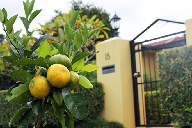 Có một khu phố xanh toàn rau quả sạch, ai đến thăm cũng không muốn về - Ảnh 14.