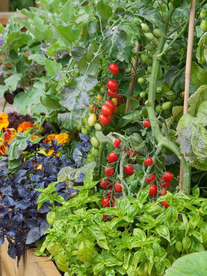10 cách trồng rau quả đẹp như trồng hoa để vừa có rau ăn vừa làm đẹp khu vườn - Ảnh 5.
