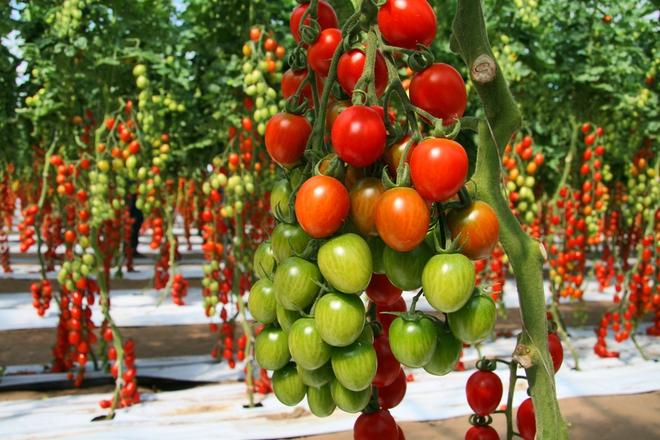 Mãn nhãn với những vườn cây cho ra trái trĩu trịt tưởng chỉ có trong mơ - Ảnh 5.