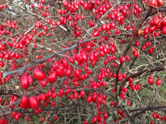 Mãn nhãn với những vườn cây cho ra trái trĩu trịt tưởng chỉ có trong mơ - Ảnh 15.