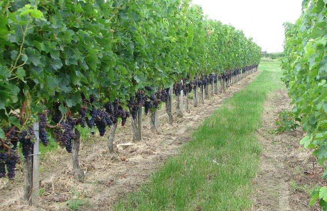 Mãn nhãn với những vườn cây cho ra trái trĩu trịt tưởng chỉ có trong mơ - Ảnh 23.