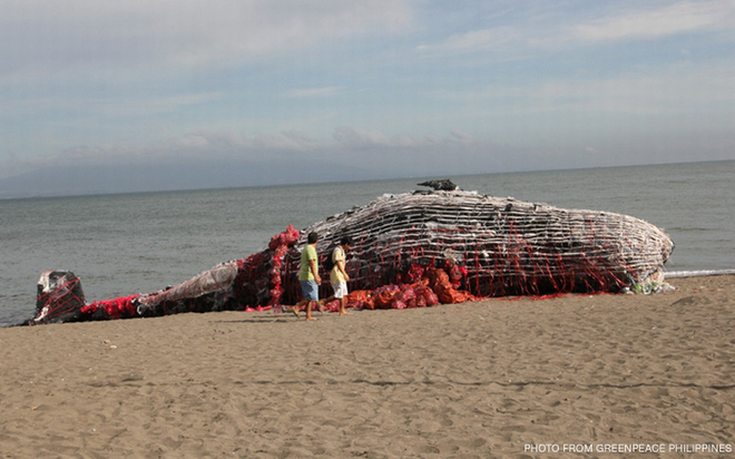 Thấy cá voi chết dạt vào bờ biển người dân lập tức đến xem và sốc khi nhìn thấy thứ trong miệng cá - Ảnh 2.