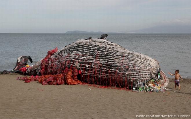 Thấy cá voi chết dạt vào bờ biển người dân lập tức đến xem và sốc khi nhìn thấy thứ trong miệng cá - Ảnh 3.