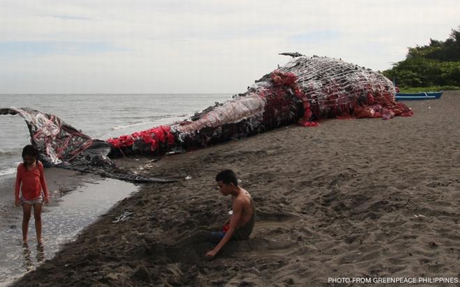 Thấy cá voi chết dạt vào bờ biển người dân lập tức đến xem và sốc khi nhìn thấy thứ trong miệng cá - Ảnh 1.