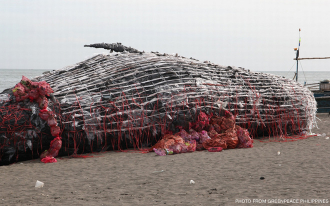 Thấy cá voi chết dạt vào bờ biển người dân lập tức đến xem và sốc khi nhìn thấy thứ trong miệng cá - Ảnh 6.