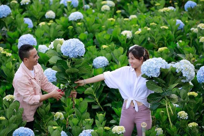MC Hoàng Linh hạnh phúc như cô gái lần đầu biết yêu trong bộ ảnh cưới tại vườn cẩm tú cầu Đà Lạt - Ảnh 7.