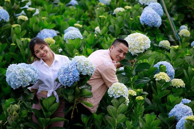 MC Hoàng Linh hạnh phúc như cô gái lần đầu biết yêu trong bộ ảnh cưới tại vườn cẩm tú cầu Đà Lạt - Ảnh 3.