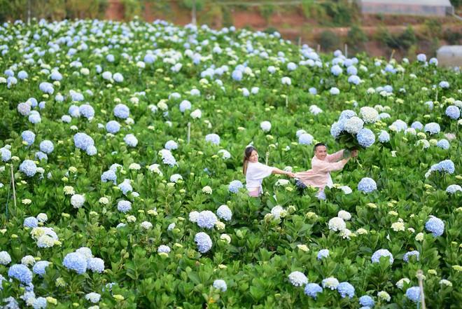 MC Hoàng Linh hạnh phúc như cô gái lần đầu biết yêu trong bộ ảnh cưới tại vườn cẩm tú cầu Đà Lạt - Ảnh 19.