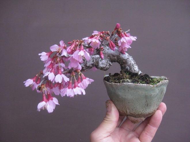 Ngất ngây với 15 chậu hoa bonsai mini siêu đẹp để trang trí nhà dịp Tết - Ảnh 1.