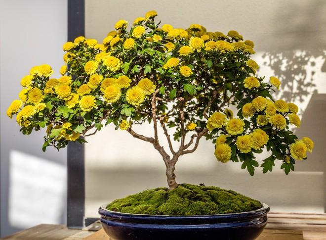 Ngất ngây với 15 chậu hoa bonsai mini siêu đẹp để trang trí nhà dịp Tết - Ảnh 14.